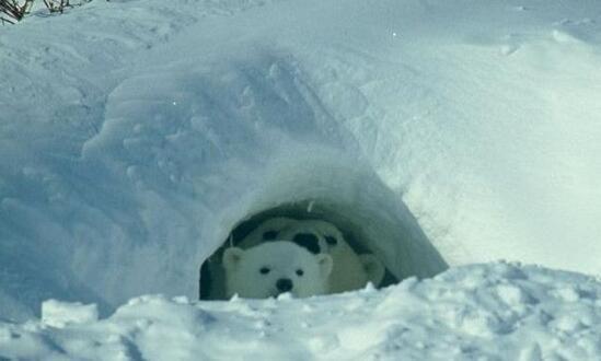 冬天到了,你知道哪些动物是要冬眠的吗?