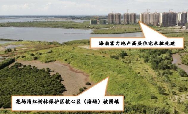 海南澄迈县顶风作案,持续填海造地、破坏红树林