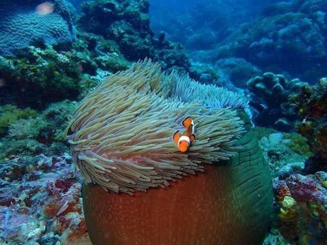壁纸 海底 海底世界 海洋馆 水族馆 桌面 640_480