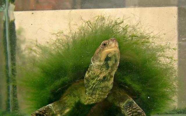 全因为这样的养龟人,才会有这样有灵性的龟!