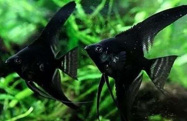最好不要在卧室内养鱼 水族资讯 南昌水族馆第4张