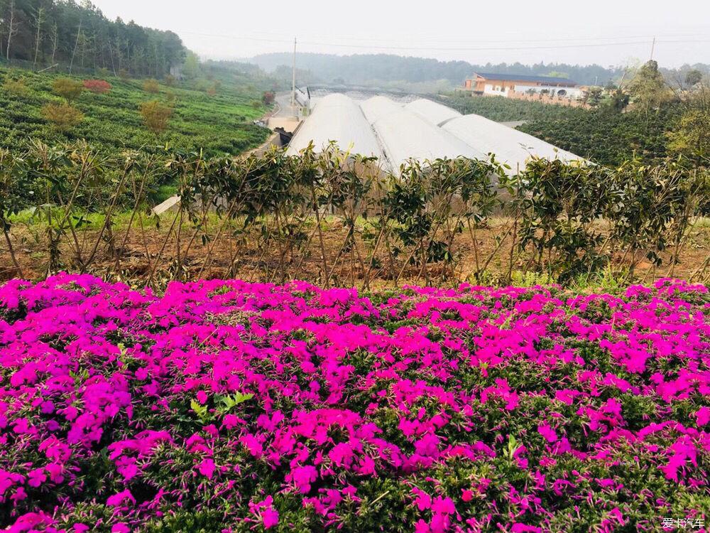 """旅游 正文  溧阳有这么一座城被称为""""慢""""城,曹山慢城!图片"""