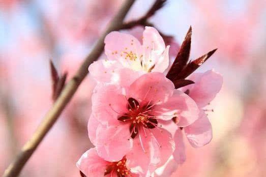 8月4号过后喜鹊报喜这5大生肖桃花开满枝终于要脱单了!