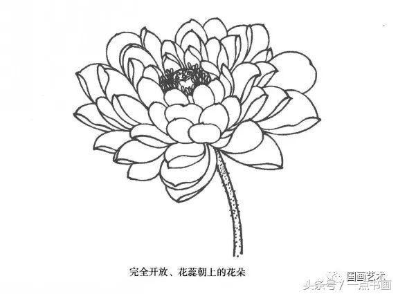 莲花的画法步骤笔