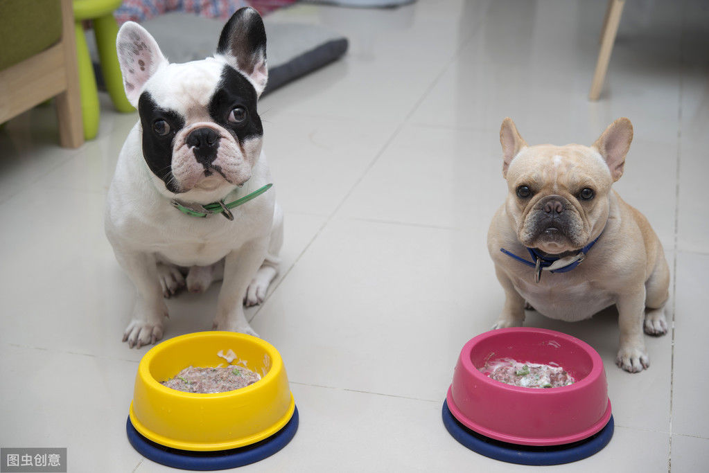 法斗英斗圆脸大眼睛,但属于短鼻犬种,有5种常见健康问题