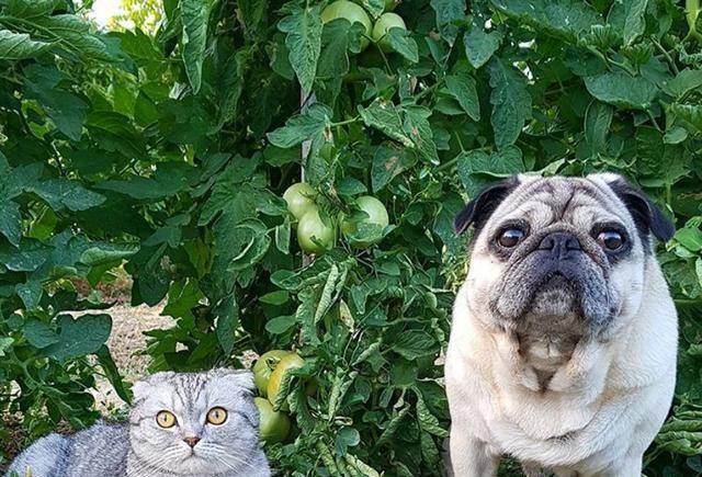 猫咪贪玩不想回家,主人抱它时抓着石头不放手,猫:本喵不回去!