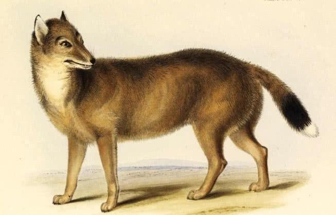 五种动物灭绝故事,最后一个被误解了几百年!