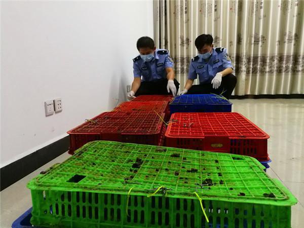 5人团伙涉嫌走私食蟹猴338只被逮捕