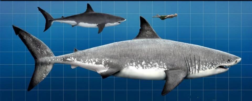 《巨齿鲨》曝新画面,巨鲨花样吃人,杰森斯坦森对抗史前巨怪