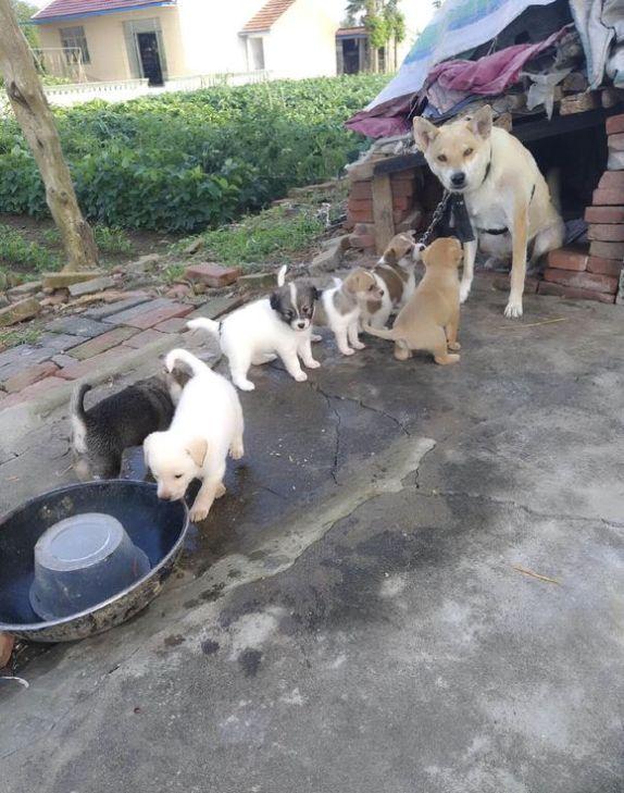 小狗们跟妈妈住的地方很小,但它们非常开心,狗:在一起最重要
