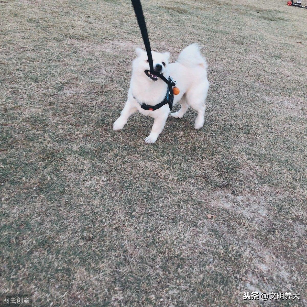 狗狗出门不肯走,是因为不喜欢散步吗?可能是这5个原因