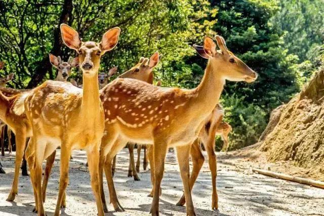 同城|疯狂动物城--中国虎园五天成长夏令营,火热招募中!