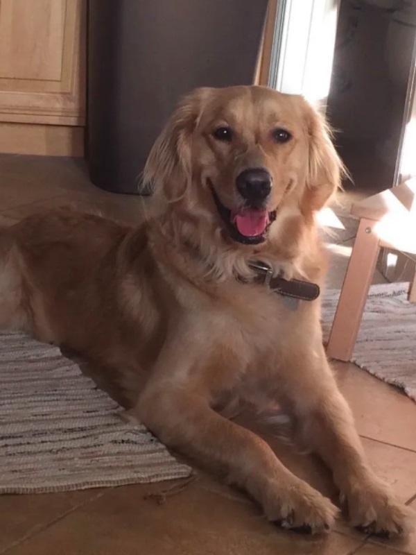 狗狗主人浴缸发现猫咪,明明门窗紧锁,金毛:没错,是我带回家的