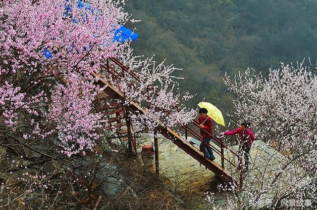 5279,春风十里桃花盛开(原创) - 春风化雨 - 诗人-春风化雨的博客