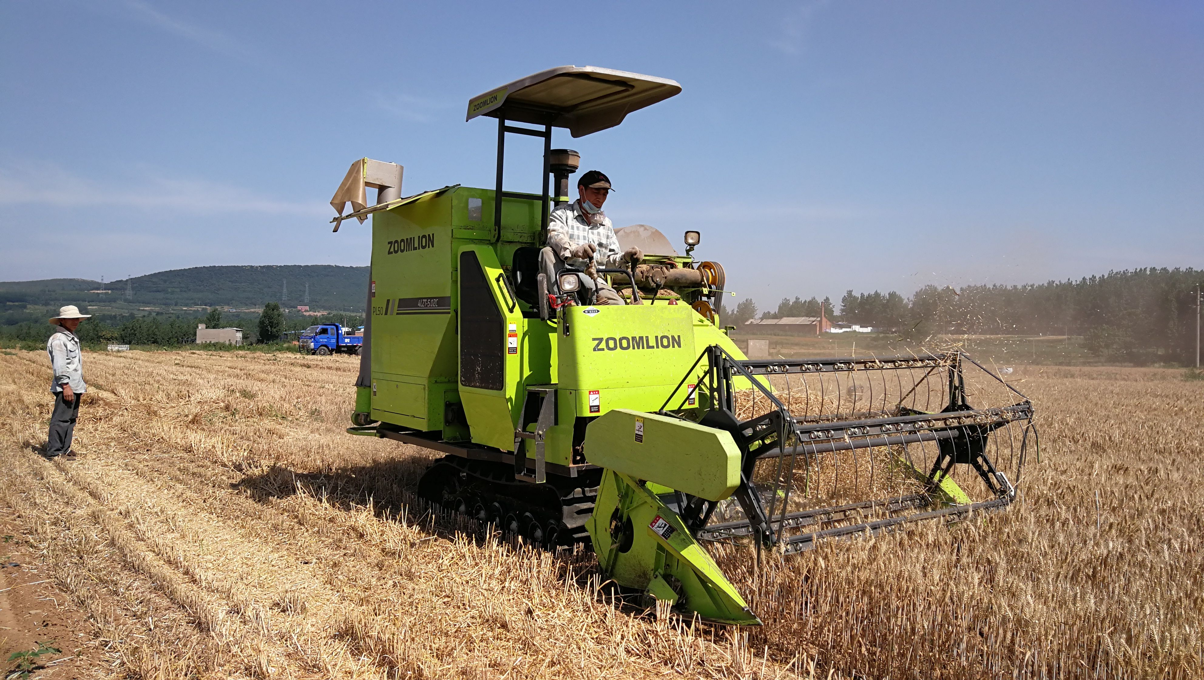 喜迎小麦丰收,遍地金黄,农民收割忙!