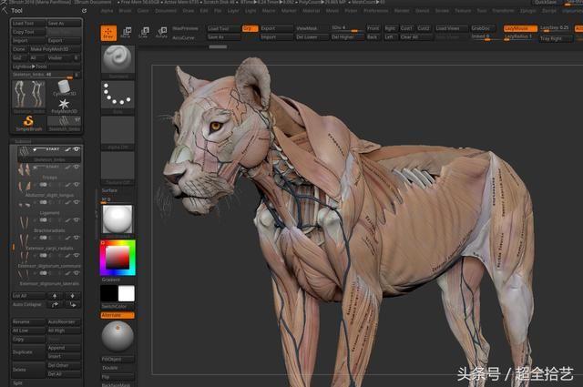 嗨,大家好。这是一个非常长的工作的结果。 做了一个完整的狮子ecorche与骨骼和影响表面的所有肌肉(深层和肤浅) 所有的建模工作是在zbrush中做了一些调整在玛雅。 它花了一年多时间,但时间很短。 我真的很高兴我做到了,因为现在我脑海中有更清晰的解剖图像。 我很自豪能够与其他学习解剖学的艺术家分享。 希望你喜欢它,也许你们中的一些人觉得有帮助