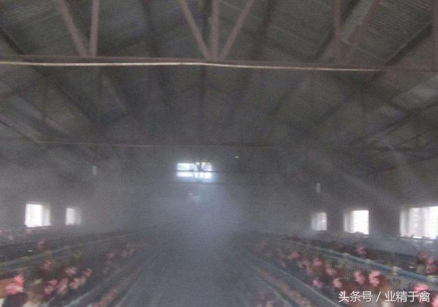 养鸡场常用的8种消毒方法想保持鸡场卫生的养鸡户快快收藏吧