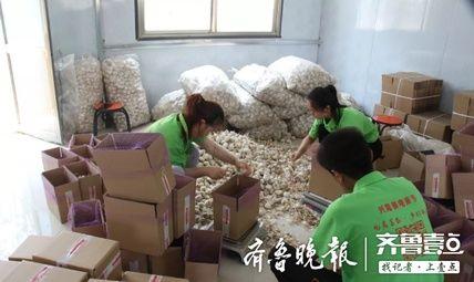 抖音、快手上卖大蒜……金乡这个地方电商扶贫有道道