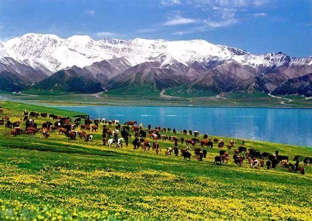 最美季节的最美风景-新疆伊犁