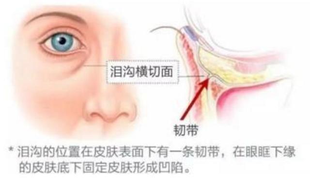 健康 正文  韧带根部通常从骨面发出,终于皮肤,起到固定皮肤软组织