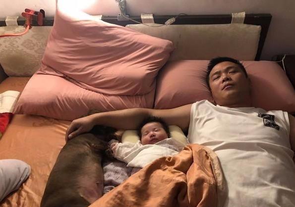 女主人半夜上厕所,回来后位置没了,老公还安然抱着狗狗女儿睡觉