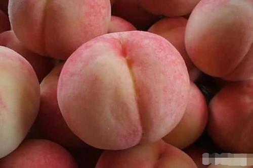 桃子,毛桃,孕妇可以吃桃子吗
