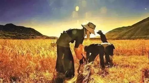 为什么说品牌农业是中国未来农业发展最大的商机?