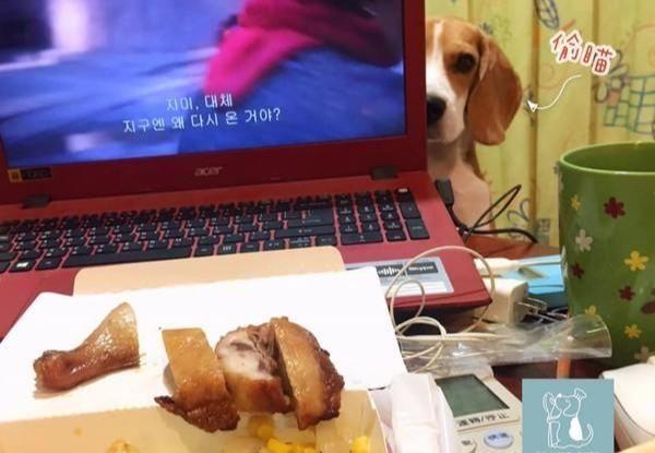 狗狗盯着主人吃饭,下秒瞬移要偷吃鸡腿,但被主人一把摁住
