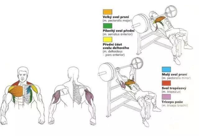 全身肌肉训练动作图解,男女通用,告别瞎练