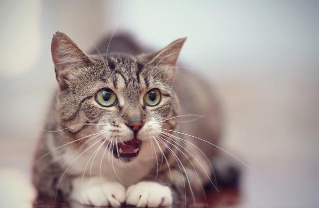 """养猫该准备哪些猫用品,记住四个""""之最"""",让养猫萌新变得轻松"""