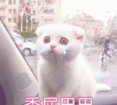 分享一组超可爱的猫咪的卡,老夫的玻璃心都表情表情包a猫咪通图片