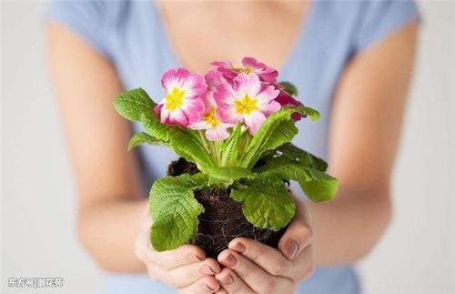 """用3种废物""""养花"""",浇1次水释放1次养分,养啥花都能旺 来看我 第3张"""