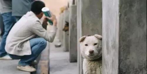 <b>可怜的医学院实验用狗 看完想哭</b>