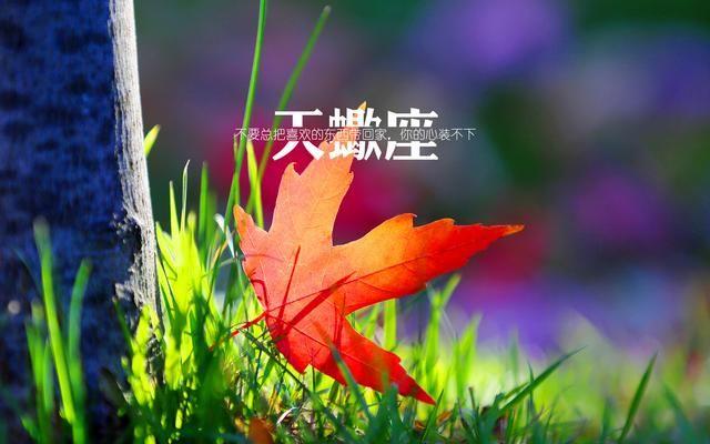 天蝎座双子座生日语图片