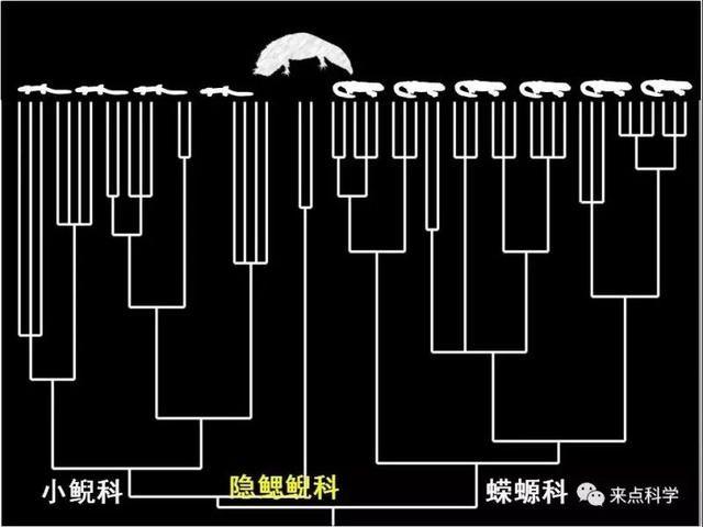 科技日报记者 李大庆 活物者 动物、植物、微生物也 誌者,记载也 活物誌者 记载一切与活物相关的稀奇事也  曾被列为极度濒危物种的娃娃鱼(学名中国大鲵),近些年已大量养殖成功,并允许食用。然而这个成功的保护案例可能要被改写了。 国际学术期刊《当代生物学》北京时间5月22日零时在线发表论文,最新完成的基于基因组水平数据揭示,中国大鲵至少由5个物种(推测有可能为8个)组成。  这一成果打破了此前学界一直以来认为的中国大鲵是一个物种的结论,对今后我国大鲵的保护策略提供了新的科学指导和依据。科学家们因此呼吁