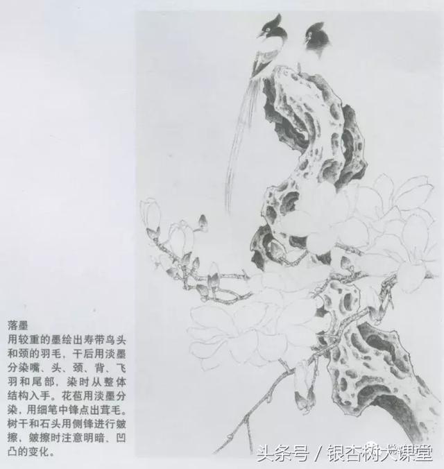 推荐 正文  一,工笔玉兰花的绘画技法 步骤一: 在复制好的稿子上用