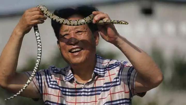 """""""中国第一蛇村""""就在浙江!几百人养300万条蛇,一天被咬"""