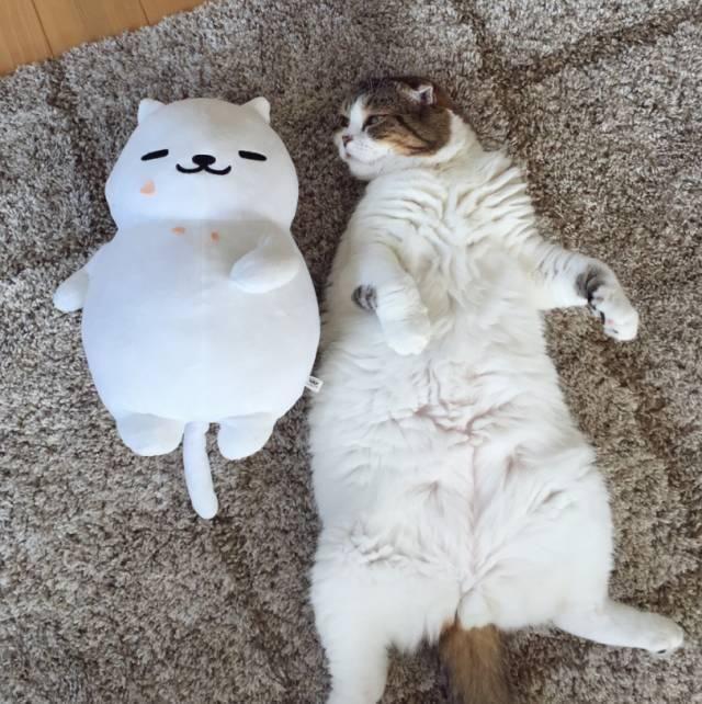 壁纸 动物 狗 狗狗 猫 猫咪 小猫 桌面 640_642