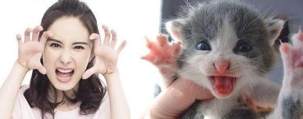 明星与动物撞脸,热巴像猫咪,王源和兔子神同步,千玺萌