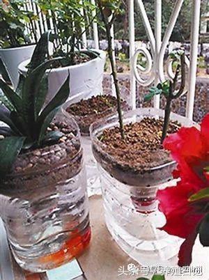 技巧|用废弃的塑料瓶自己diy制作花盆