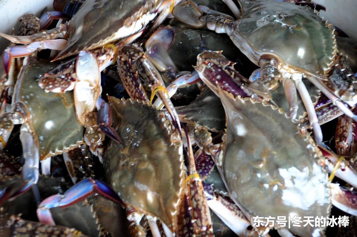 梭子蟹怎么做好吃?呛蟹江生蟹螃蟹炒米糕川人独爱香辣蟹!