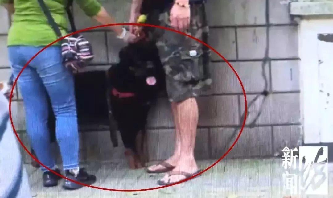 大狗咬伤日籍女子 上海日籍女子被大型犬咬