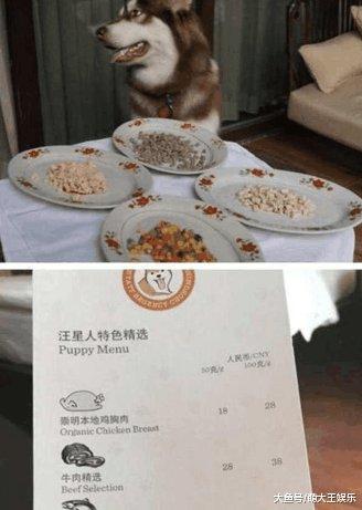 有钱人怎么生活? 看了王思聪的狗食, 贫穷限制了我们的想象力