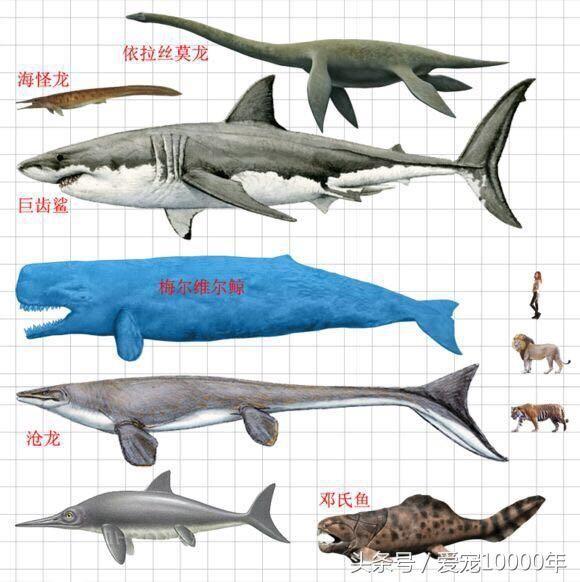 李冰冰和杰森斯坦森遭遇巨齿鲨,其现代物种鲨鱼难找对象已濒危