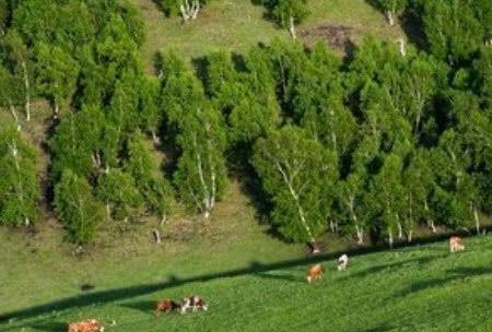 在北京有一处原始森林你知道吗?看看这里的森林美景吧!