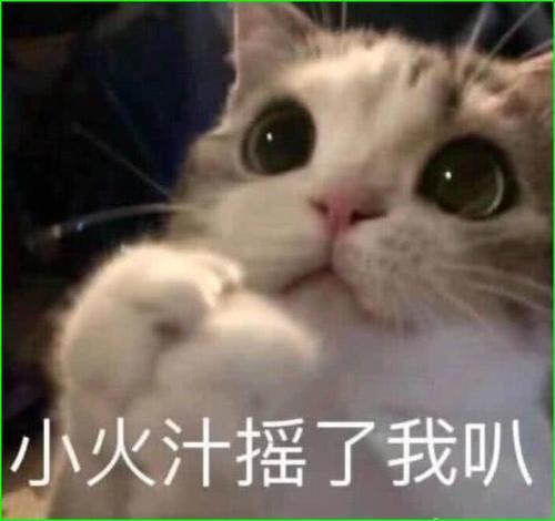 超萌的猫咪生气得了,你若安好,那还表情!五一假期2018表情图图片