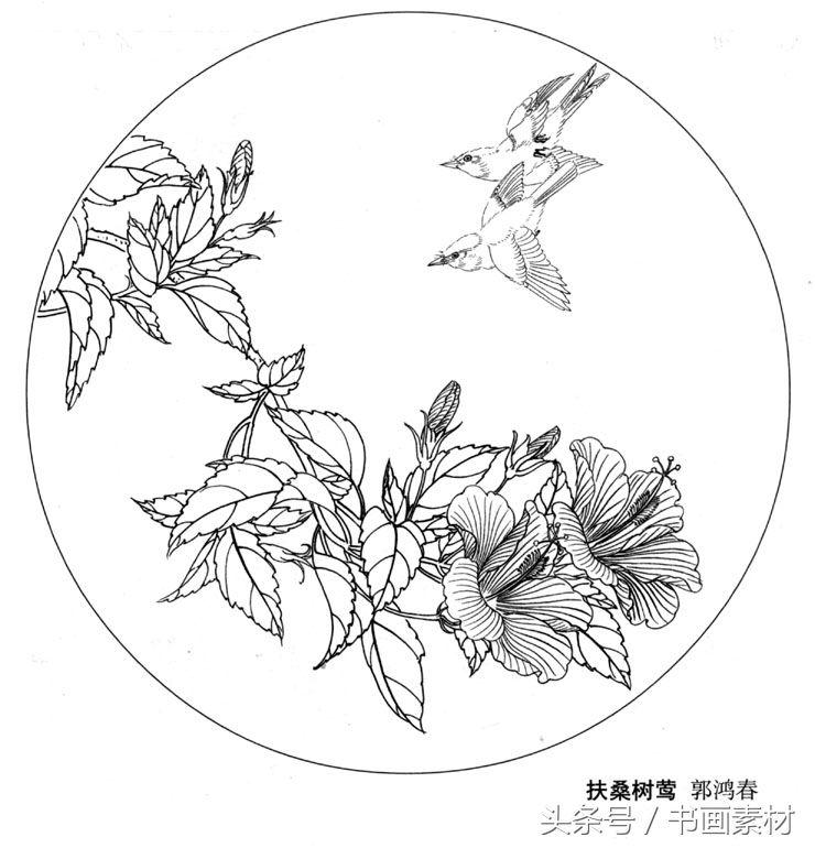 书画素材|国画篇之名家各类花卉花鸟白描图整理图集欣赏图片