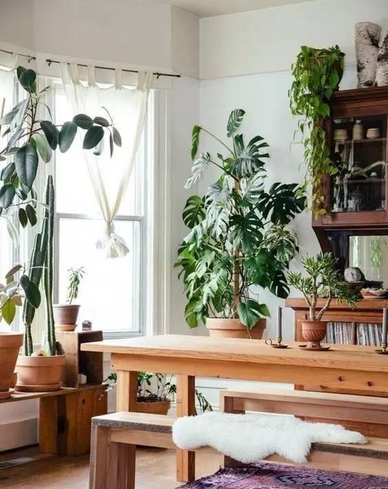 8种绝配的绿植摆放指南!你们知道几个?
