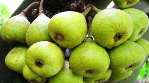 女性想要不显老,推荐吃以下三种水果,排毒养颜,改善血液循环