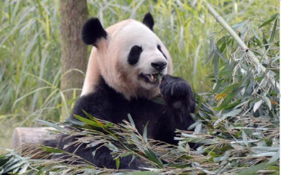 旅游 正文  重庆动物园位于九龙坡区杨家坪,是重庆市较大的综合性公园